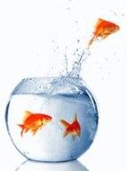 fishdiscover2.jpg