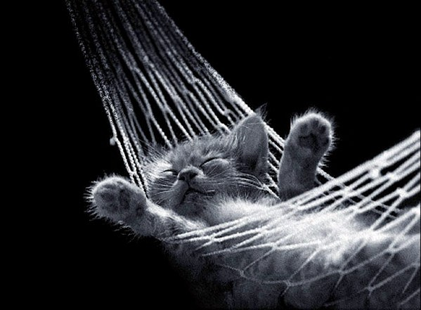 lazy_cat1.jpg